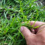 According to Trugreen Complaints about Weeds Can Be Resolved by Starting Lawn Care Now