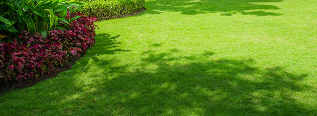 Trugreen Reviews The Best Way To Grow Grass In the Shade