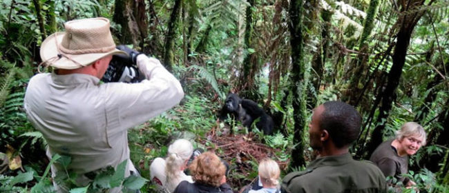 Gorilla Tracking in Uganda – A Must See and Do Experience
