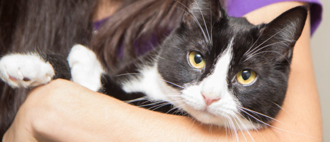 How to Adopt and Care for a Shelter Cat