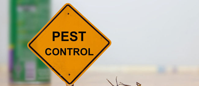 Essential Tips For Choosing The Best Pest Control Service