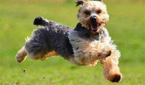 Taking Care Of Senior And Disabled Dogs – CBD Oil Helps With Mobility?