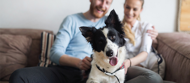 5 Ways to Keep Your Dog Happy and Healthy This Summer