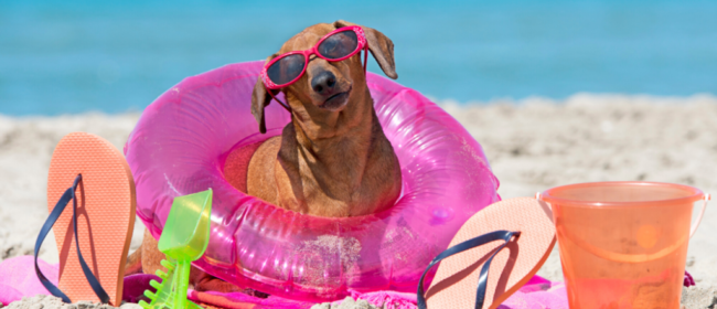 5 Things To Think About If You're Planning An Active Holiday With Your Dog