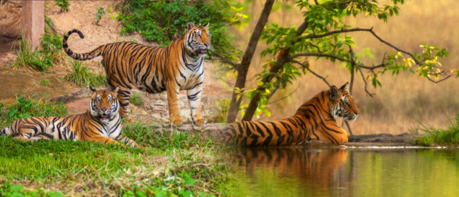 6 Top reasons to visit wildlife sanctuaries on your next vacation